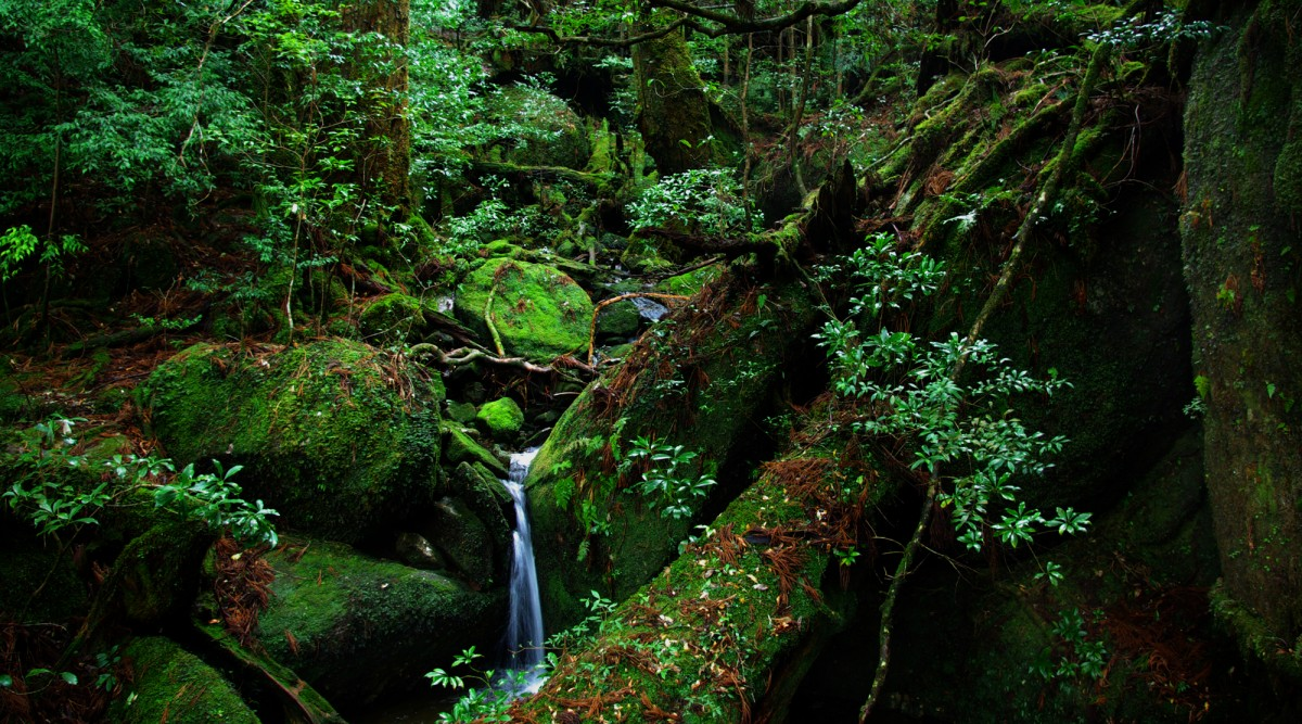 Mysterious of YAKUSHIMA(Island)